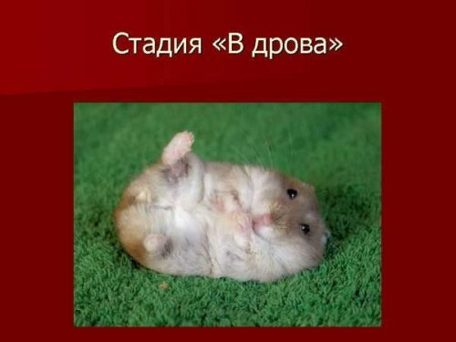 http://www.konaworld.ru/f/news/11.jpg